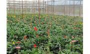 Đưa nông nghiệp công nghệ cao về vùng sâu