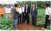 Đường ra thế giới của nông sản Việt