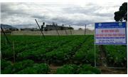 Nâng cao năng lực thương mại nông sản tại Đà Lạt