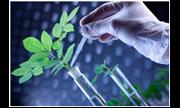 Công nghệ phân tử nhân giống cây trồng