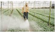 Nông nghiệp công nghệ cao Đà Lạt: