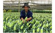 Nghiên cứu sản xuất một số chế phẩm sinh học, hóa học sử dụng trong bảo quản rau quả, hoa tươi
