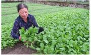 Nấm đối kháng hạn chế rau màu héo rũ