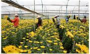 Về một cách nhìn nhận đối với việc phát triển nông nghiệp công nghệ cao ở Lâm Đồng