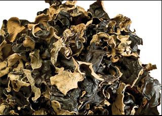 Dried Primirive Fungus ( Raw Fungus)