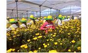 Mở hướng cho rau, hoa công nghệ cao