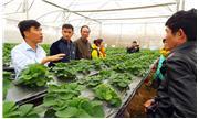 Lai tạo giống phục vụ phát triển nông nghiệp công nghệ cao