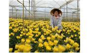 Lâm Đồng: Giá trị canh tác đạt 122 triệu đồng/ha