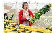 Chứng nhận độc quyền cho 5 loại hoa Đà Lạt