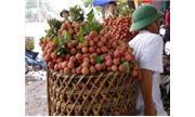 Nhật chuyển công nghệ giữ thực phẩm tươi 10 năm cho VN