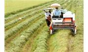 Nông nghiệp Việt Nam thực trạng và giải pháp