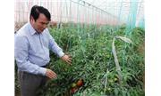 Tiếp tục chuyển đổi vật nuôi, cây trồng đạt hiệu quả cao