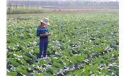 Sản xuất rau an toàn – hướng đi mới trên những cánh đồng Việt