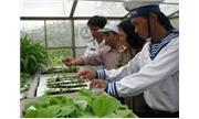 Trồng rau xanh cho thu hoạch 3kg/mét vuông ở Trường Sa