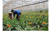 Vai trò của Hội Nông dân trong xây dựng nông thôn mới