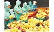 Xuất khẩu rau quả: Triển vọng đi cùng thử thách